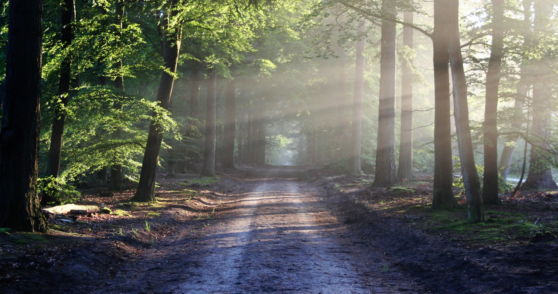 Forest Road. Sun Rays